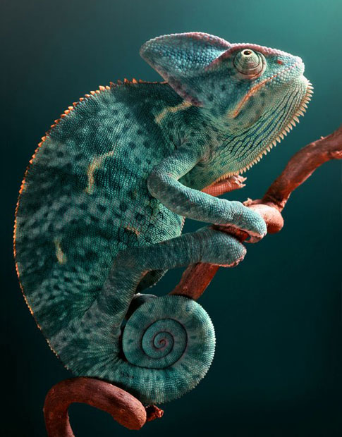 Pittsburgh Reptile Show & Sale